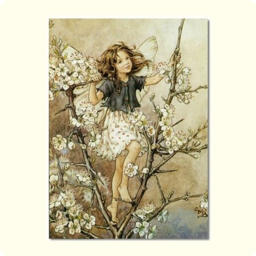 Flower-Fairies-of-the-Winter-The-Blackthorn-Fairy-by-Cicely-Mary-Barker