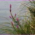 Lac Azur 2509153