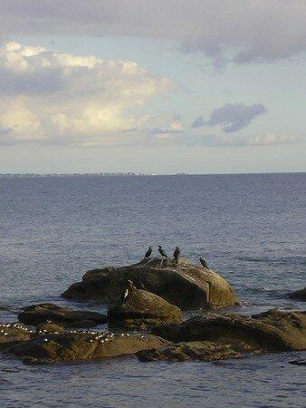 mercormoran