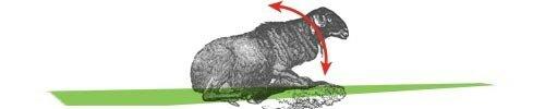 moutons_oui_oui