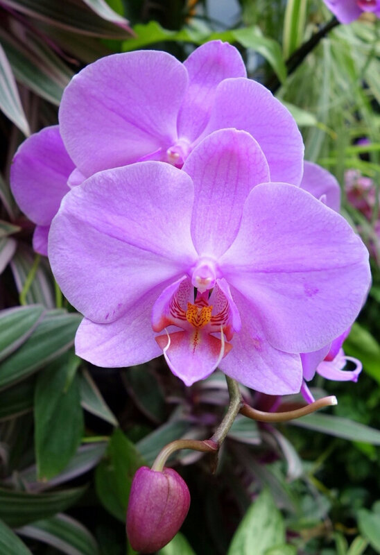 ob_8ef4bc_terra-botanica-angers-47-01