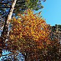 Feuillages automne 07121513
