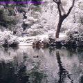 neige 2002b