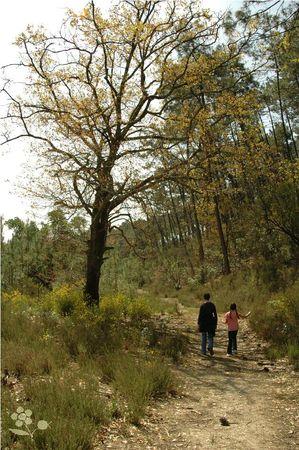 Lacanau Océan_balade en forêt