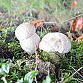 Un jour en forêts d'Aspe Barétous, le 12 septembre 2012...