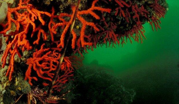 Les travailleurs du corail
