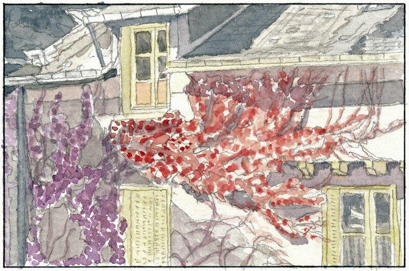 22 Sablé - Maison couverte de vigne rouge (non localisée) 1992 02 02 (3 de 3)