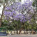 Mexique 126 (Copier)