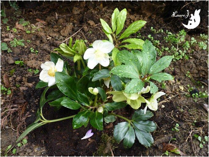 Une belle surprise au jardin mon jardin du bonheur for Jardin bonheur 2015