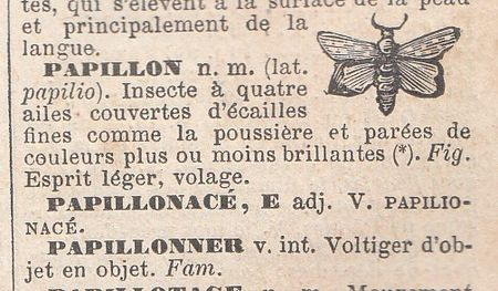 d_finition_papillon