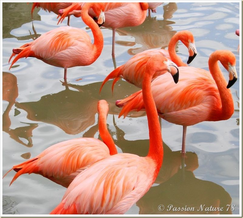 Les flamants roses (20)