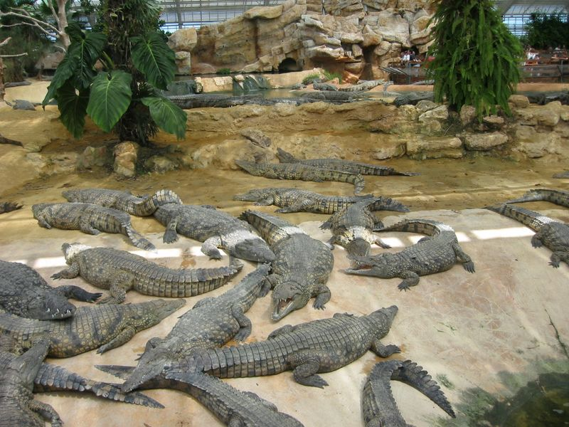 048_Crocodiles