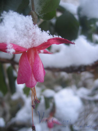 fuschia_neige_co
