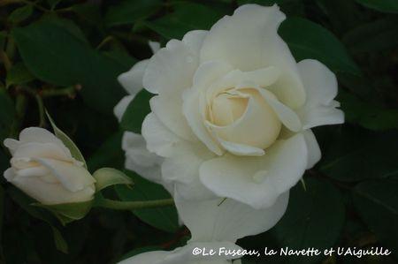 jardin13oct2012-9