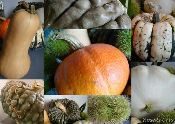 courges gros plan
