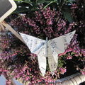 Le papillon bruyère