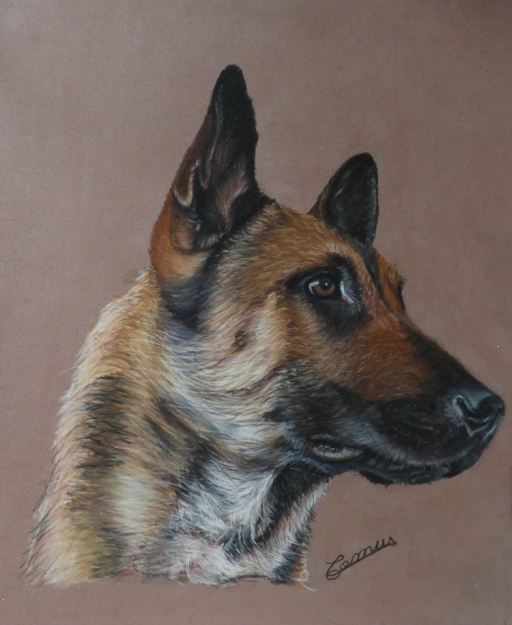berger belge malinois pastel sec sur pastelmat 24 x 30 cm disponible photo de chiens. Black Bedroom Furniture Sets. Home Design Ideas
