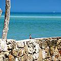Iguana - Isla Holbox
