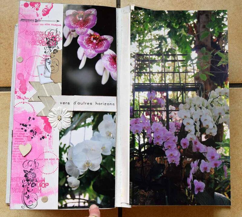 Orchidées-5