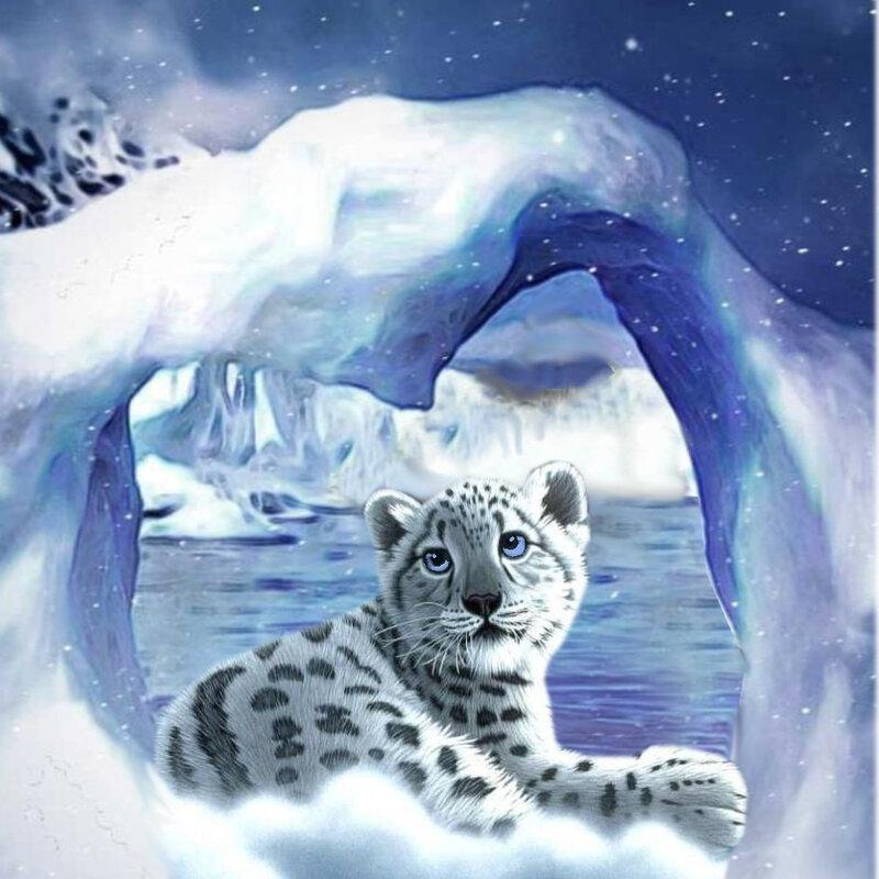 carte voeux chat leopard des neiges