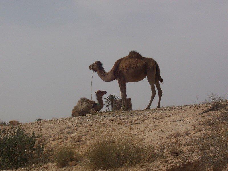 Djerba Mai 2006 (70)