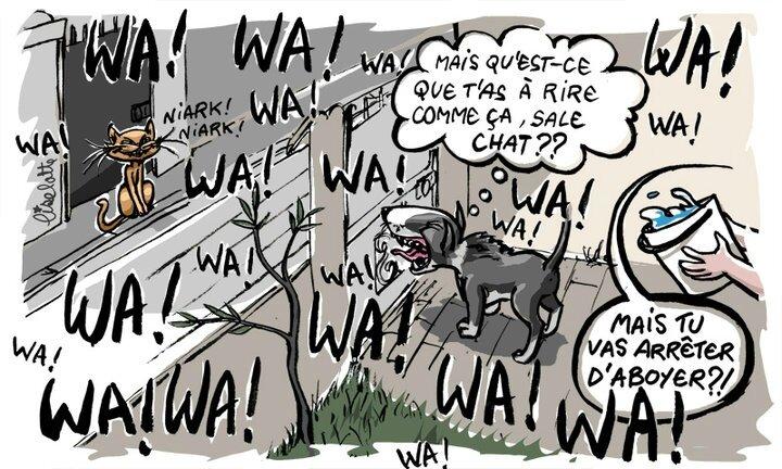 aboiement-chien