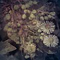 In a polish garden 4 - nature morte - pologne