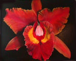 orchidee_rouge