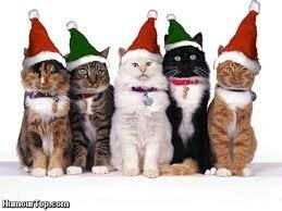 5 chats fêtes