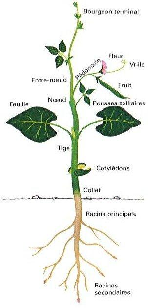 Les plantes partie 1 aqualibra coaching et naturopathie for Les plantes et le gel
