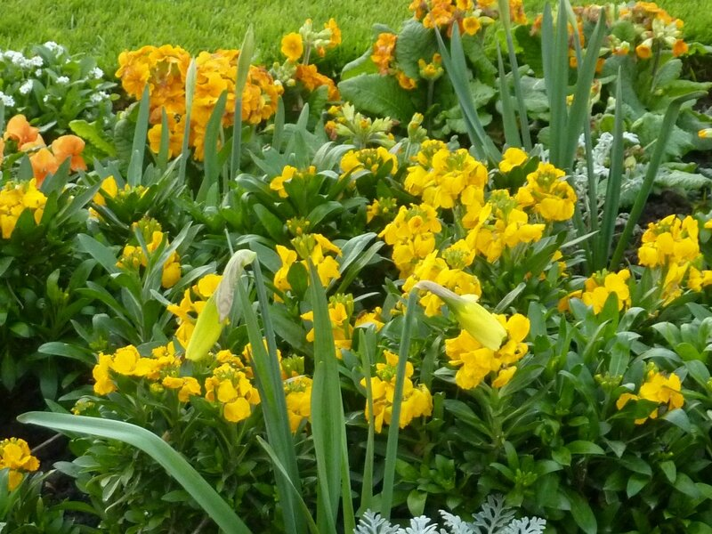 Fleurs (12)