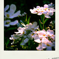 fleurs2-pola