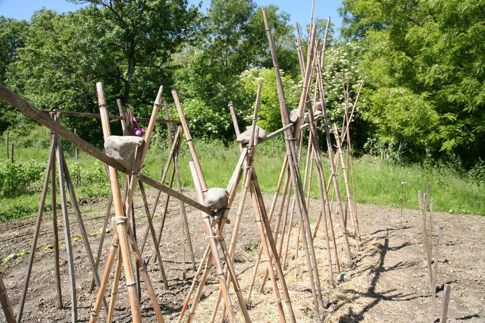 reconstruction des tipis tomates 29 mai mon potager 2013. Black Bedroom Furniture Sets. Home Design Ideas