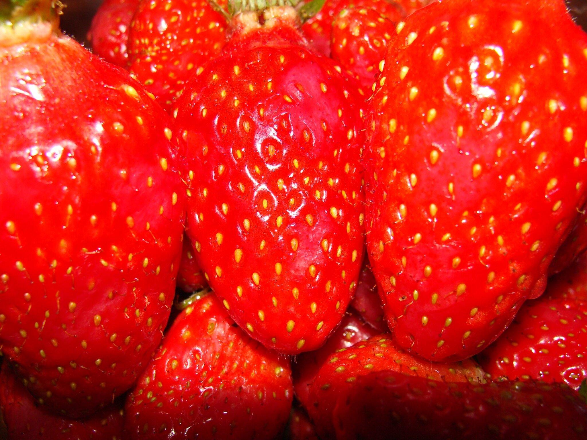 fraises et fraisiers pouce c pousse. Black Bedroom Furniture Sets. Home Design Ideas