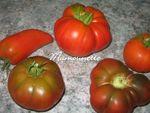 Tomates_bio_du_jardin_farcies_001