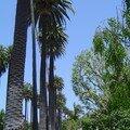 Beverly Hills 070608 016