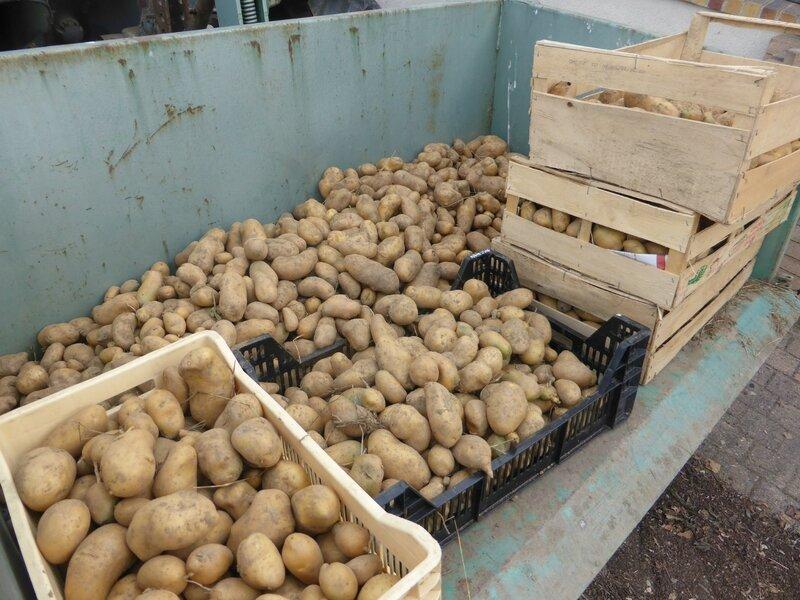 21-pommes de terre (2)