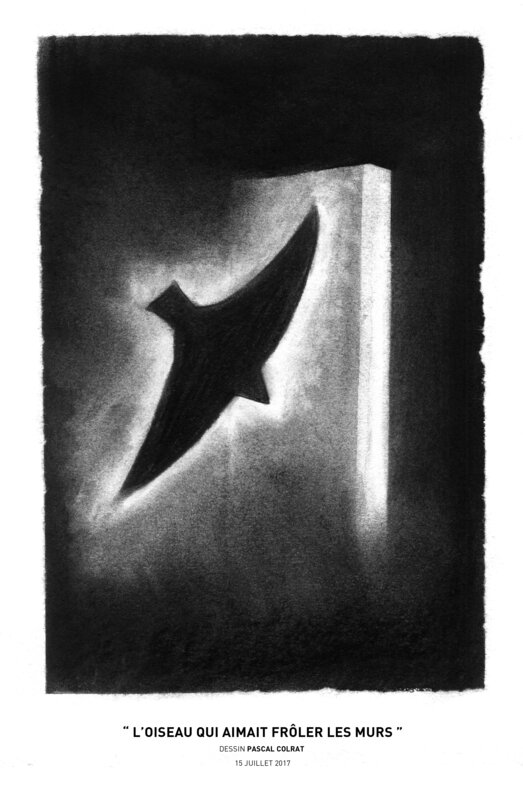 __l_oiseau_qui_aimait_froler_les_murs__