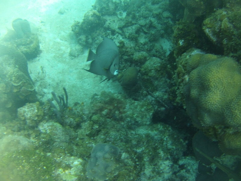 caye à French Harbour -Roatan (14)