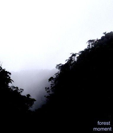 Forêt de Bélouve [01-2008]