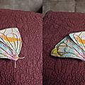 2016-03-05 papillon dmtm2