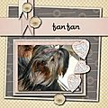Yorky n2 notre Fanfan
