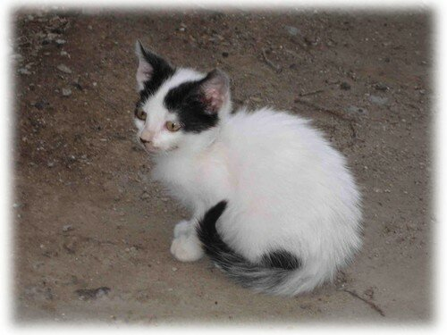 chat Trogir 6 album