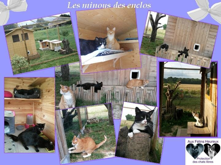 photos des enclos