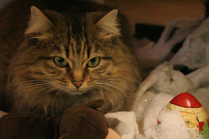 Yuna sous l'arbre de Noël