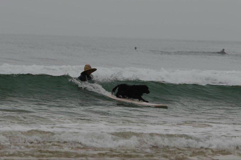 toutous surfeurs facebook 1
