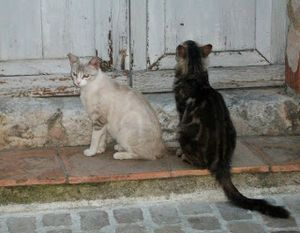 2 chats de Tourrettes sur loup