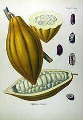 Theobroma_cacao_-_Köhler–s_Medizinal-Pflanzen-137