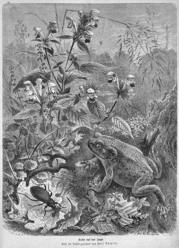Die Gartenlaube_1873_The Garden Arbor