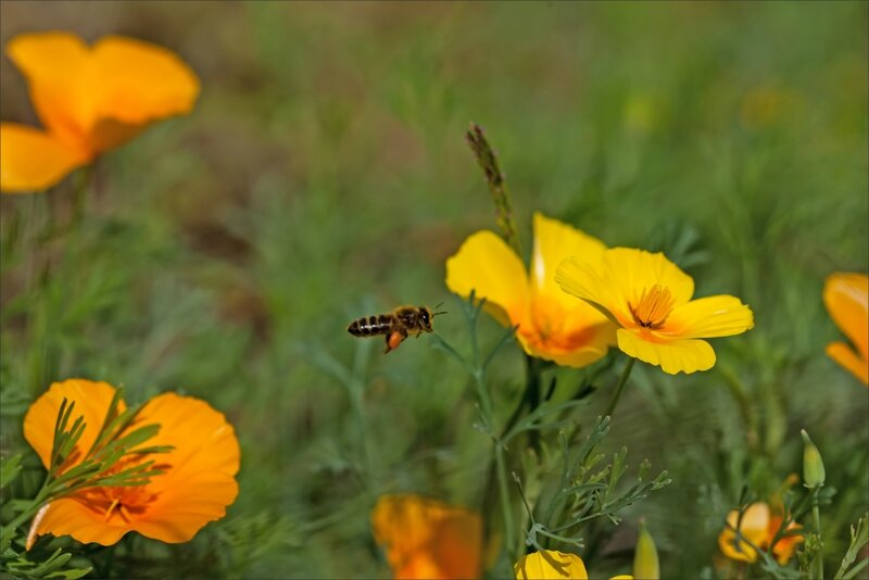 mur abeille vol 180815 3